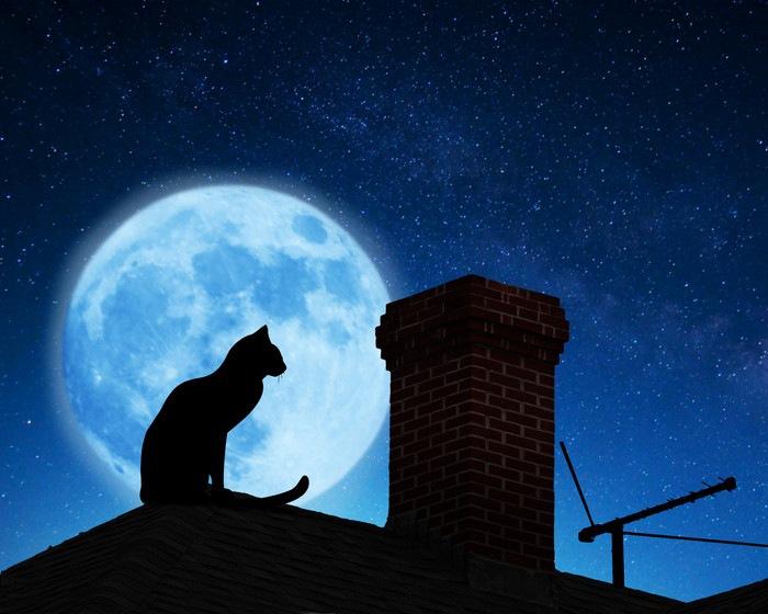 満月と猫のシルエット