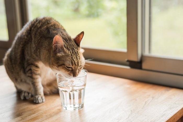 テーブルの上のグラスに口をつけて水を飲む猫