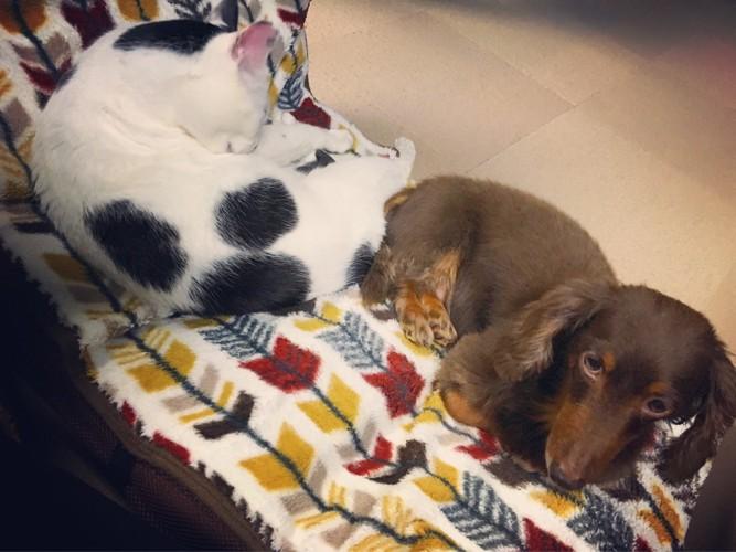 犬と寄り添って寝る猫そら