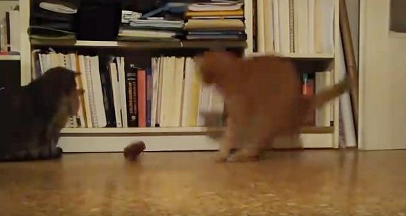 メトロノームを倒して驚く猫