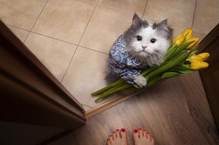 恩返しの花をかかえる猫