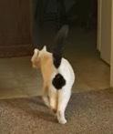 珍しい柄猫19