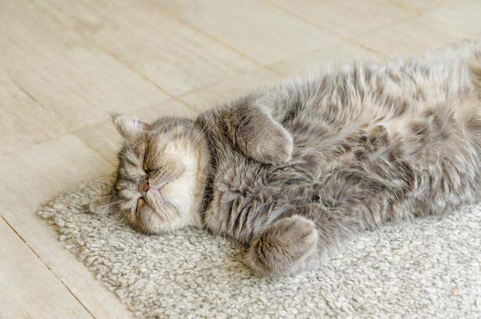 じゅうたんの上で寝る猫