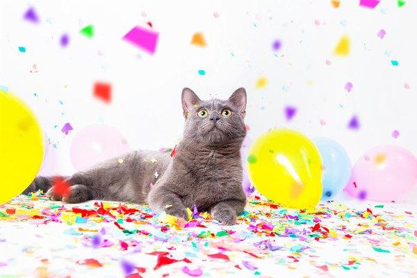風船や紙吹雪がある場所に居るグレーの猫