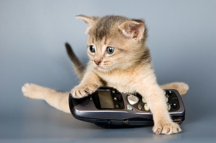 携帯電話と子猫