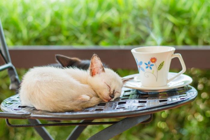 テラスで眠る猫