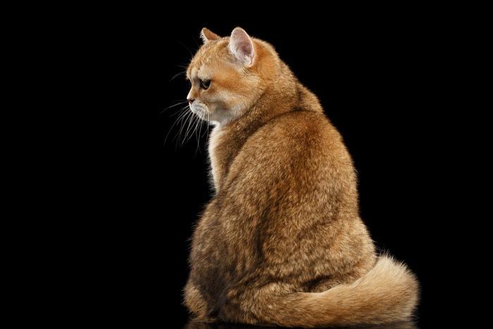 背中を向けて座る猫
