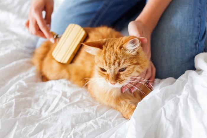 飼い主にブラッシングされている猫