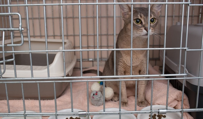 ケージの中に入る猫