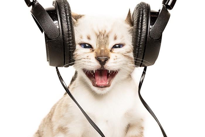 ヘッドフォンと白い子猫