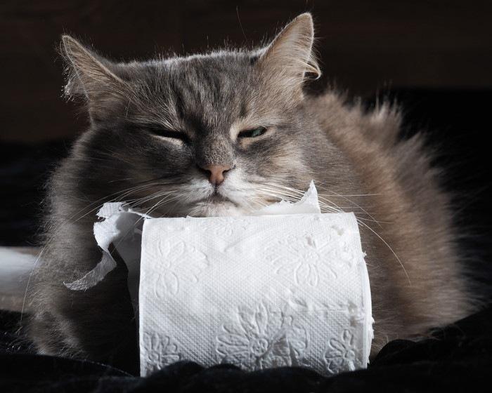 トイレットペーパーに顔を乗せる猫