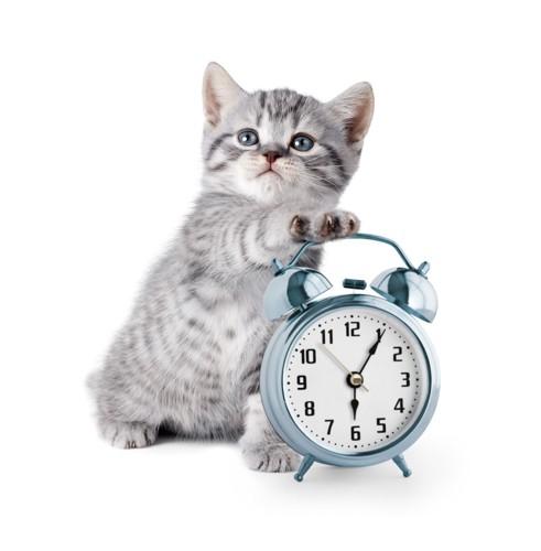 目覚まし時計にタッチする子猫