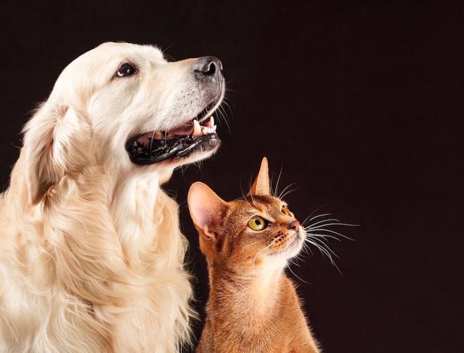 黒い背景の犬と猫