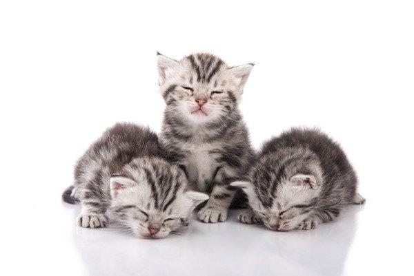 眠い三匹の子猫