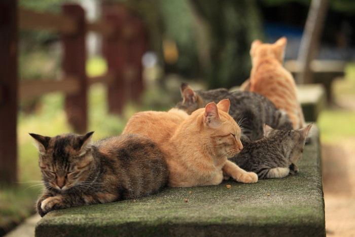 ベンチの上に沢山の猫