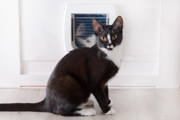 猫用ドアの前に座っている猫