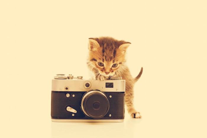 カメラの上に乗る子猫