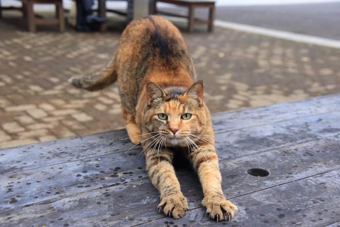伸びをしながらこちらを見つめる猫