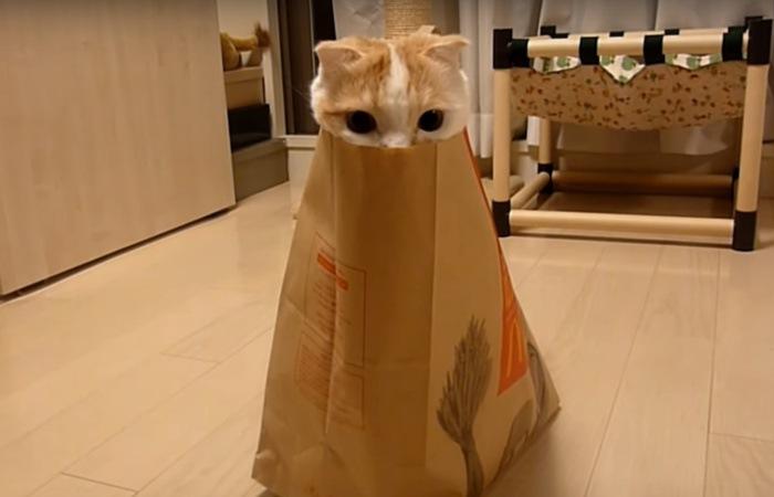 紙袋を一体化してる猫(真正面バージョン)