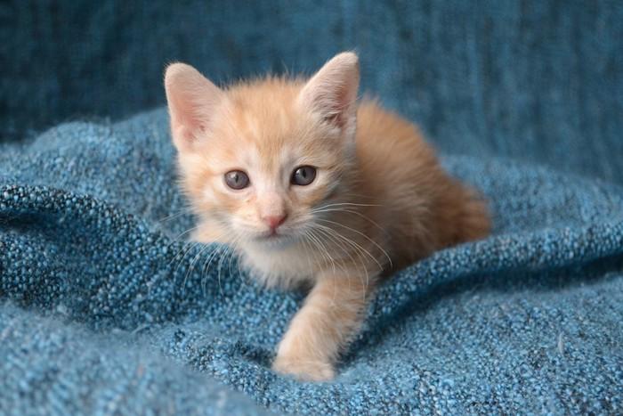 毛布にフミフミしている子猫