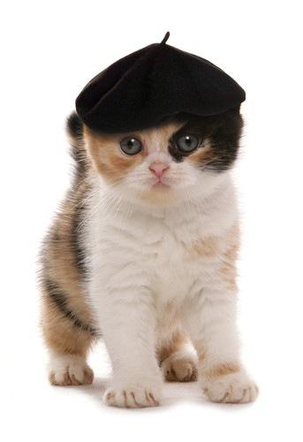 水彩画に出てきそうな猫