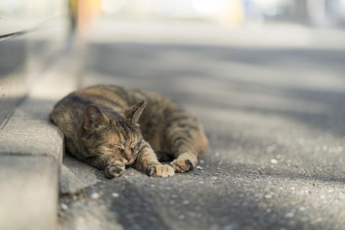 道路で丸くなる猫