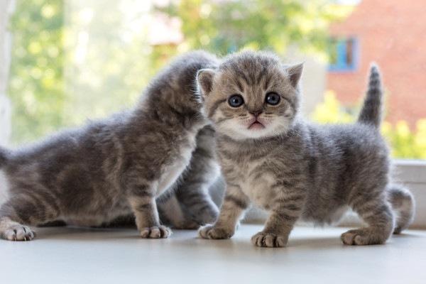 4匹の子猫