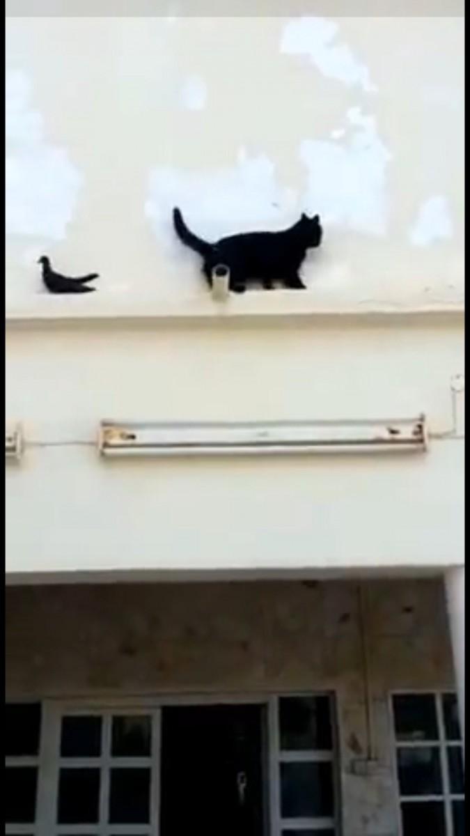 バックして戻る猫