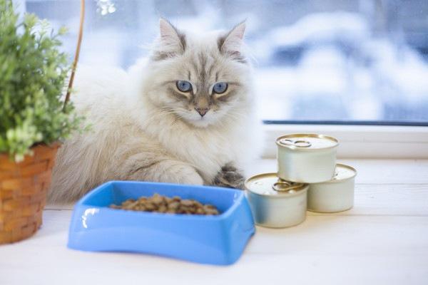 缶詰とドライフードをみる猫