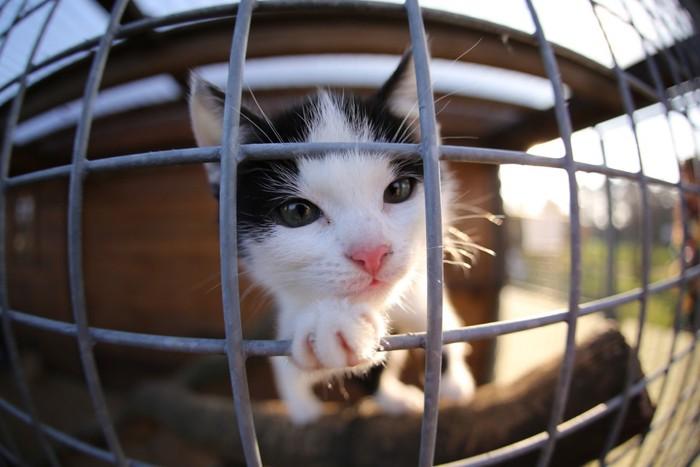 檻にいる子猫