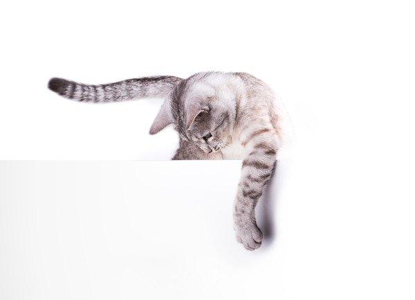 白いものをはがそうとする猫