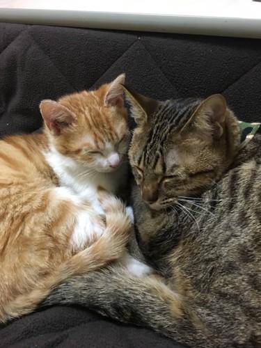 くっ付いて寝るハルとセナ