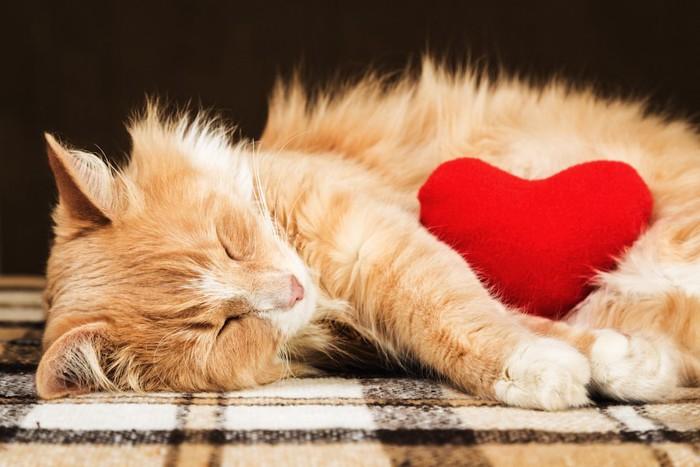 ハートのクッションと寝転んでいる猫