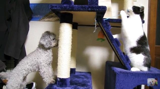 オモチャを引っ張る猫とそれを眺める犬