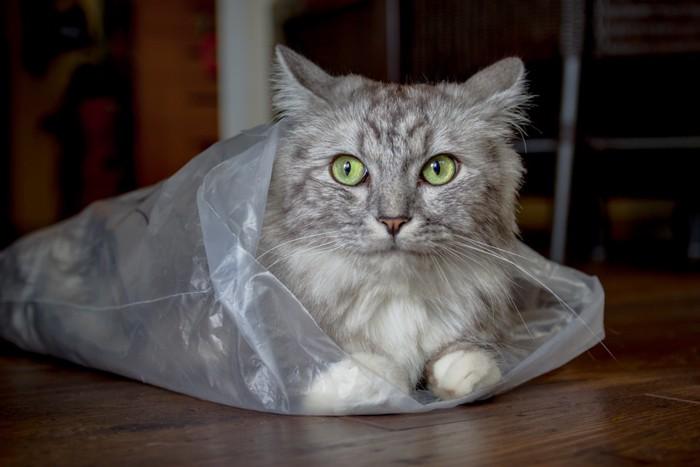 ビニールから顔を出している猫