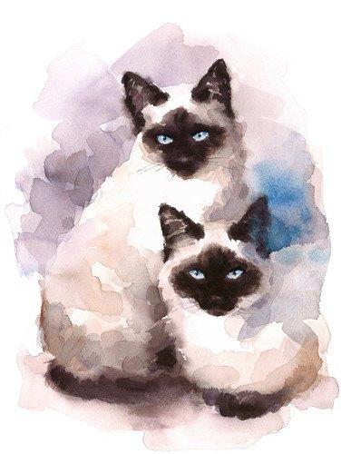 シャム猫のリアルなイラスト