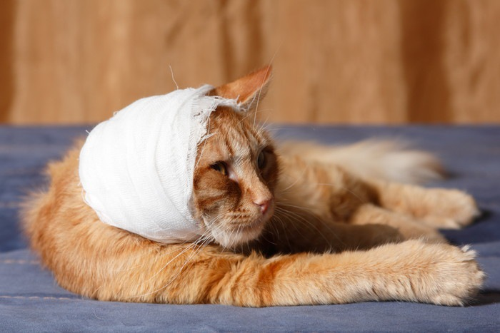 頭に包帯をした猫