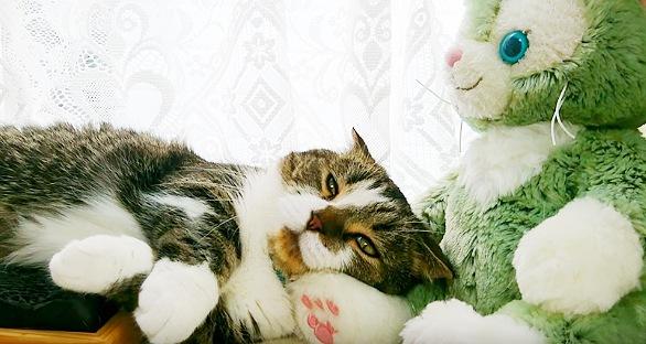 幸せな顔をしている猫