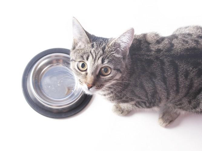 空になったお皿と見上げる猫