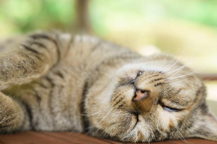薄く目を開けて寝る猫