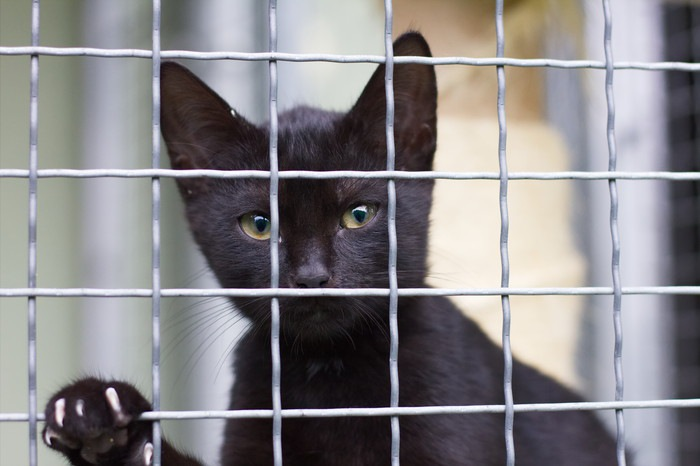 ケージに入った黒猫