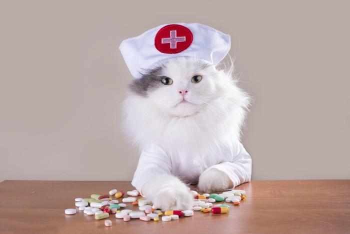 看護士さんの帽子かぶり薬を触っている猫