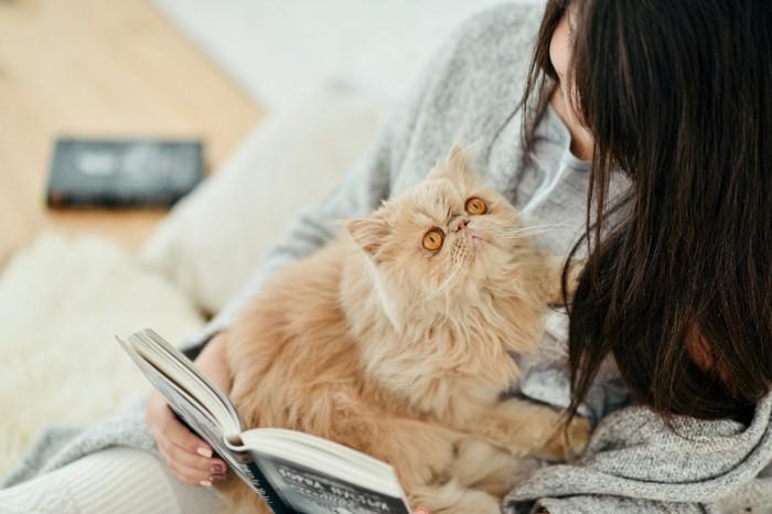 人に甘えるペルシャ猫