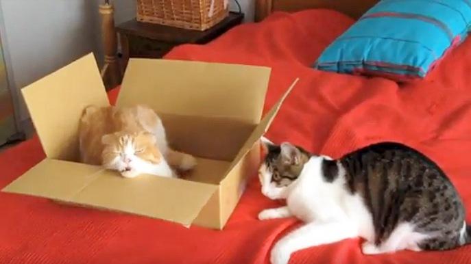 あくびする猫と落ち込む猫