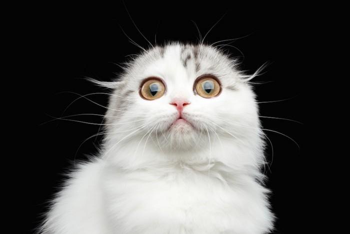 驚いて目を見開く猫
