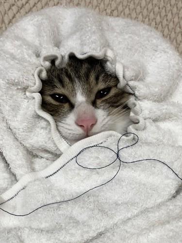 赤ちゃん帽子姿猫
