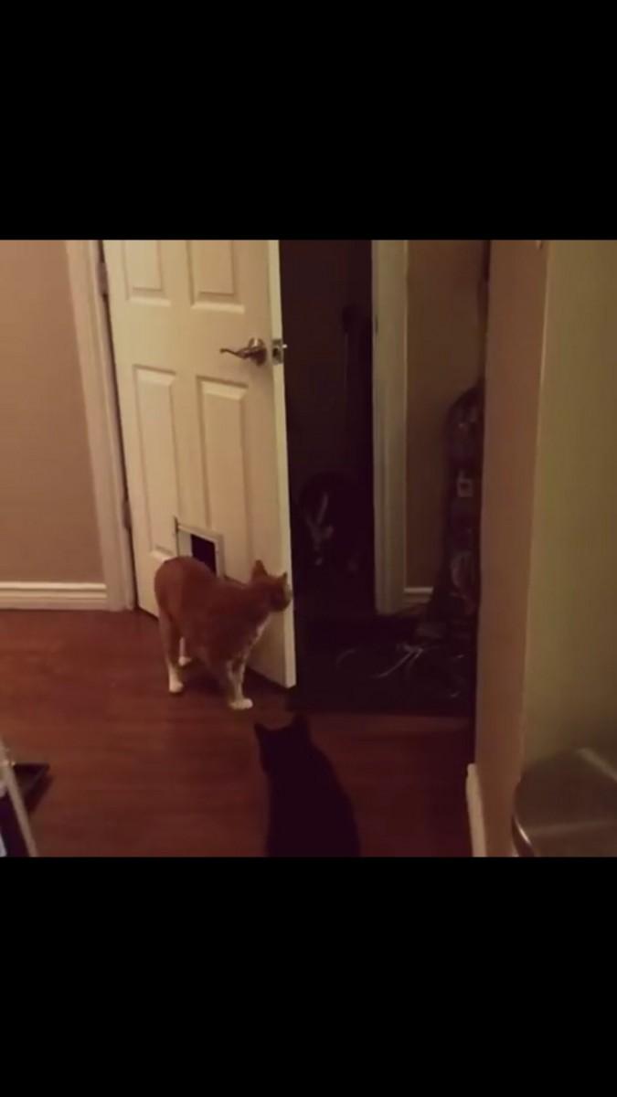 振り向く猫