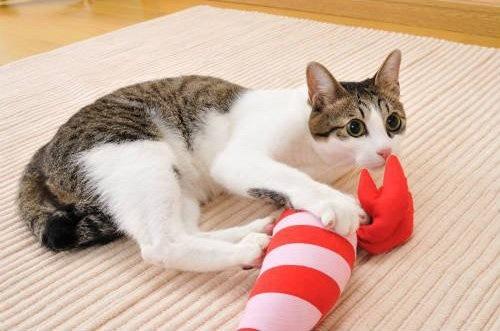 えびのけりぐるみで遊ぶ猫
