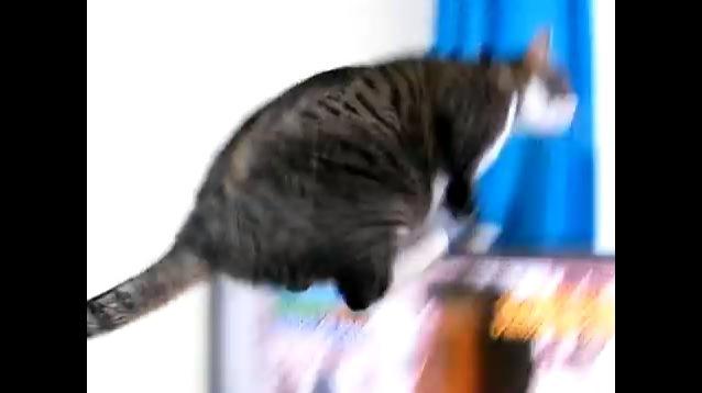 テレビに乗っかる猫