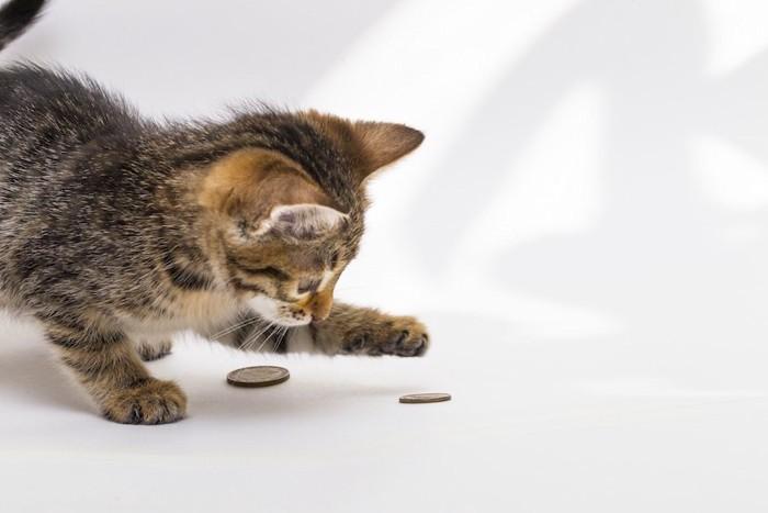 コインで遊ぶ子猫
